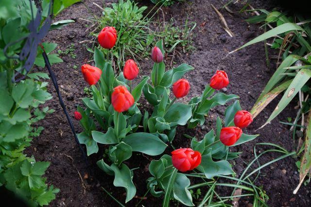 5 maja rano 2015 rok 004.jak-zmniejszyc-fotke_pl.jpeg