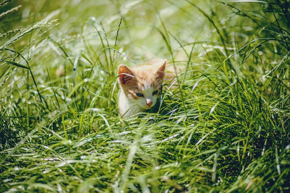 kotek w trawie.jpg